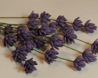 Levander  - filler flower