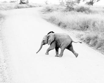 Limited edition fine art wildlife photography print: 'Fun Run'