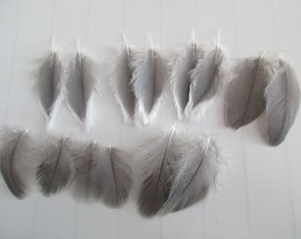 14 beautiful grey and white bird feathers
