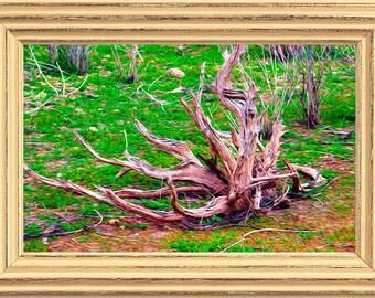 Dry Lake Bed Driftwood - Digital Download, Southwestern Artwork, Driftwood Print, Nature Scenery Art, Outdoor Art Work, Peaceful Scenery