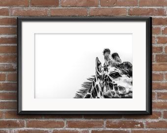 Giraffe Photograph, Giraffe Photography, Photography, Animal Photography, Digital Print