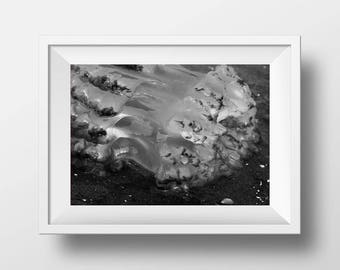 Jellyfish on a Beach Black & White Print