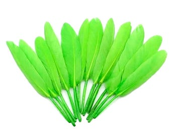 Indian feathers dyed Green