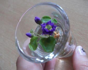 mini shot my little fish in his lotus aquarium