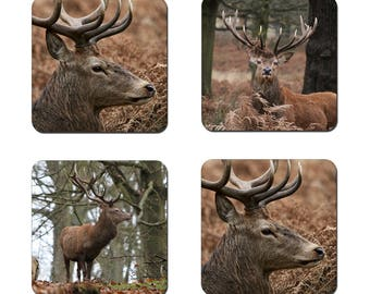 Set of 4 Stags drinks coasters featuring award winning photography by UniquePhotoArts.