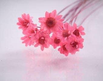 X 1 pretty Daisy mini pink 0.8 cm