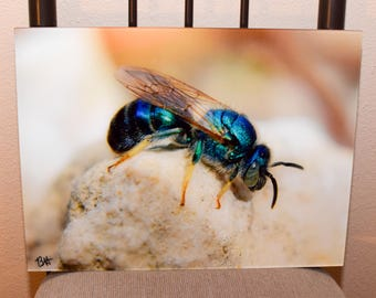 Orchid Bee photo on acrylic