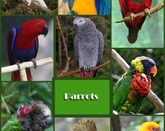 Photo collage, Poster Print, Printing on Matte Paper, Art print, Parrots, Wall Art, Home decor, Office decor, Gift