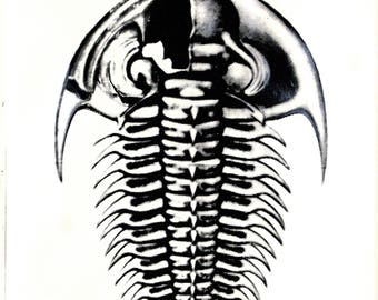 original art print / serigraph art / silkscreen print / black and white / home decor art/ sea fossils / 'Trilobite'