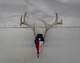 Texas Deer Skull