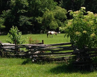 Country scene, wood fence and pony background
