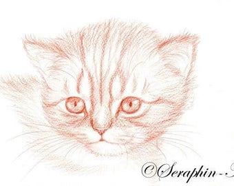 Kitten Original Pencil Drawing