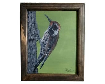 Arizona Woodpecker with frame