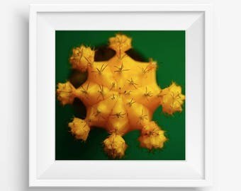 Yellow Cactus on Green