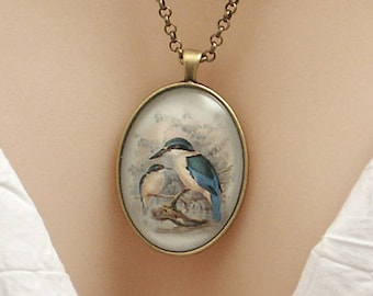 New Zealand Kingfisher bird, vintage art print, large oval Picture Pendant, 40x30mm, glass dome pendant, cameo