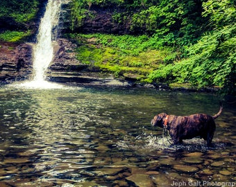 Dog Wades in Waterfall