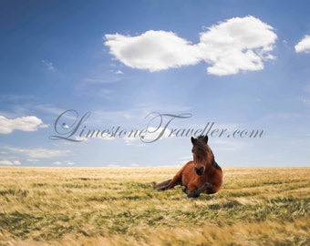 Horse in a Field - Landscape - Matted Photo Art, Various Sizes