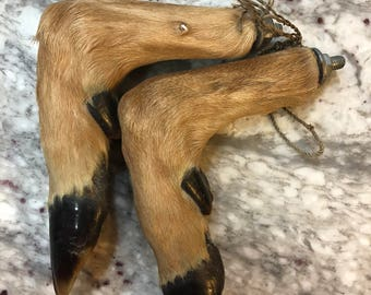 Taxidermy Deer Hooves with hardware