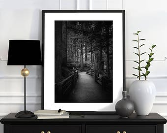 Canadian Forest - Black and White Art Print Photography