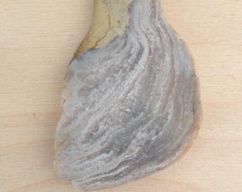 beach stone, stromatolite, unpolished slab,found stone