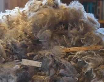 Romney Cross Raw Wool Fleece, 6 ozs