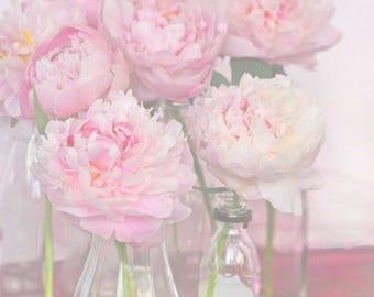 farmhouse decor, pastel pink wall art, peony art, soft floral art, pink peony photo, French peony, shabby cottage decor,  pink flower photo