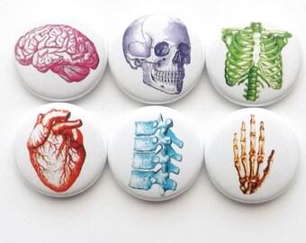 Anatomy Fridge Magnets Set, Vintage Anatomy Buttons, stocking stuffers, coworker gift, vintage heart, geek button pin graduation, dorm decor