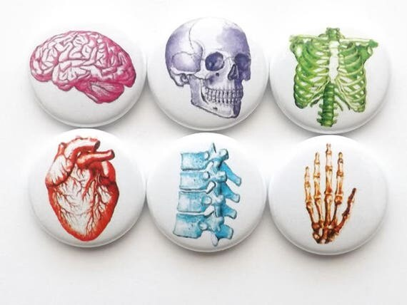 Anatomy Fridge Magnets Set, Vintage Anatomy Buttons, stocking stuffers, coworker gift, vintage heart, geek button pin graduation, dorm decor