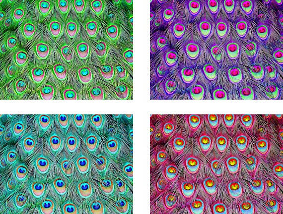 """4 peacock feather patterns background abstract clip art collage sheet 8"""" x 10"""" digital download graphics images printable scrapbooking"""