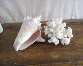 Sea Shell Conch  Beach Decor