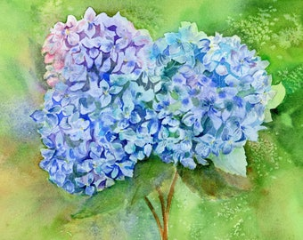 Cape Cod Hydrangeas Flowers Blue Purple