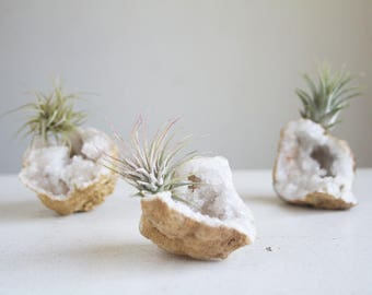 Air Plant Crystal Display, Little Calcite Geode, Miniature Sparkling Crystal Garden, Boho Decor, Unisex Gift, Wedding Favor