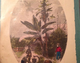 1851 Wood Engraving West Indies Banana Palm Coconut Hand Colored