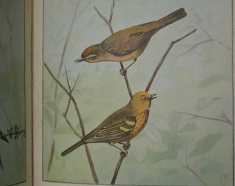 Very Pretty 1930s Bird Prints Book Frank Ashbrook Square Prints for Framing Mellow Gorgeous Hues for Art Single Pair or Grouping Nature