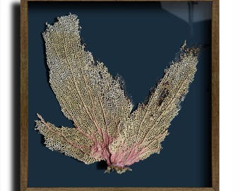 Framed Sea Fan (40 x 40cm)