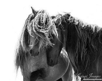 Two Sable Island Stallions - Fine Art Horse Photograph - Horse - Sable Island - Wild Horse - Black and White -Fine Art Print