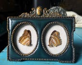 Real Lacewing Butterflies in Vintage Frame