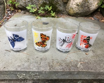 Butterfly Classification Cups  (set of 4)