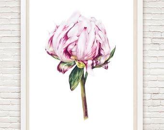 Art Print, Peony Print, Fine Art Botanical Print, Watercolor Print, Watercolor Painting, Flower Painting, Home Decor Wall Art, Gift For Her