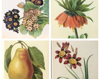 Vintage Hardcover Art Book-Pierre Joseph Redoute Royal Flower Painter-Botanical Art-Reference Work