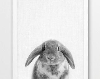 Rabbit Print, Bunny Print, Woodlands Animals Photo, Nursery Baby Shower Gift Wall Art, Cute Baby Animals, Black White Photo, Kids Room Decor