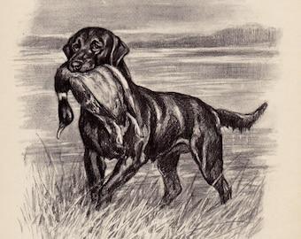 Beautiful Vintage LABRADOR RETRIEVER Print Duck Hunting Decor Dog Art Black and White Gallery Wall Art Home Library Decor 3389