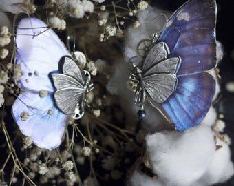 Boucles d'oreille CHRYSALIDE véritable papillon Morpho estampe papillon et rouages d'horlogerie