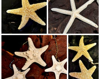 Coastal Beach STARFISH Fan Pull and Chain Light - Starfish Fan Light Lamp Pulls Home Decor Sugar Knobby Pencil Starfish