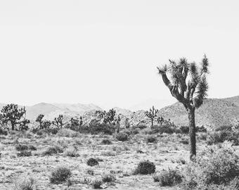 Joshua tree, black and white,  desert photography, california photography, desert decor, cactus, desert decor, large wall art, 40x60,