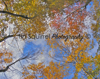 Look Up - White Mountains, New Hampshire... Nature Photography, Fall Foliage, Sky View, Wall Art, Photography Print