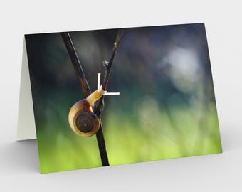 Small Snail Card, Blank Note cards, Nature Note Cards, Greeting Cards, Three Note Cards, 5x7 Cards, Nature Blank Card, All Occasion Cards