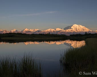 Alpine Glow of Mt Denali - Landscape Photography Wall Art - Denali National Park reflection pond - Sunset Alpine glow