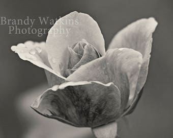 Rose photography print, Black and white rose photography print, rose decor, black and white print, rose wall art, decor for nursery