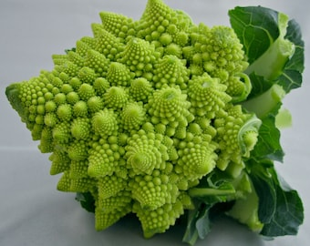 Broccoli romanesco natalino seeds,79, non gmo, gardening, organic seeds, heirloom seeds
